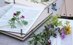 Zarte Blüten wie die von Hornveilchen, Kosmeen, Malven oder Storchschnabel…