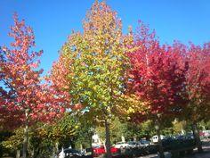 #Noia #LaCoruña, #autumnTrees