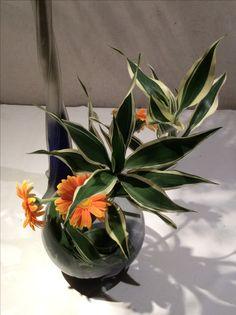 2017.5.18 季節の花を生ける。写真だと、ガーベラ直線過ぎてみえるかも。