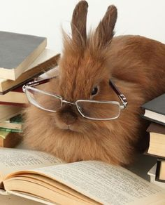 Disapproving Rabbit disapproves of your reading choices, apparently.
