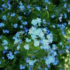 Shade-Loving Flowering Plants for a Woodland Garden   Dengarden