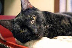 Timberlake has been adopted from the Seattle Humane Society :-)