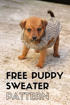 xxs puppy sweaters, make a puppy sweater with this free knitting pattern perfect for a beginner. Knitted Dog Sweater Pattern, Knit Dog Sweater, Dog Pattern, Free Pattern, Knitting Patterns Free Dog, Free Knitting, Knitting Basics, Crochet Ideas, Baby Outfits
