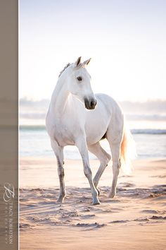 """warmbloods-and-thoroughbreds: """"Found on Facebook - Tracy Robertson Photography """""""