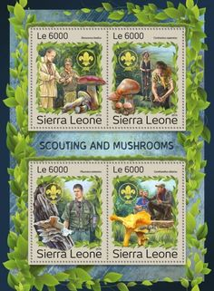 SRL161206a Scouting & Mushrooms (Xerocomus badius; Cortinarius caperatus; Pleurotus ostreatus; Cantharellus cibarius)