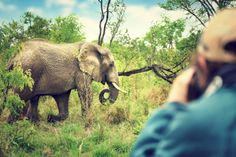 Elephant Experience in Addo | African Safari | Near PE - Dirty Boots African Elephant, African Safari, Photography Contests, Wildlife Photography, Photography Tools, Wild Life, Safari Game, Wildlife Biologist, Protected Species