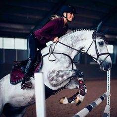 Love the combination of plum and grey  #equestrian #equestrianstockholm #horse #horses #equestrianperformance