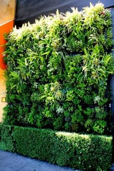 Vertical Garden by Greenscaped Building