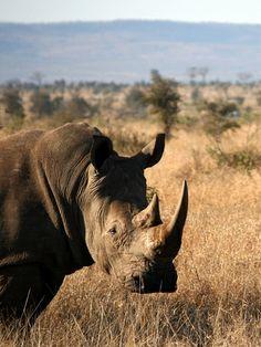 Kruger National Park, South Africa (via Gogobot)