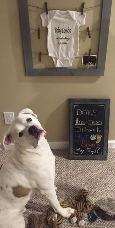Pregnancy announcement with our dog! Thanks other pinners!