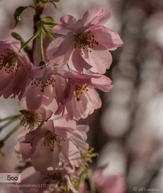 Dressed in pink by ajvlundsten. Please Like http://fb.me/go4photos and Follow @go4fotos Thank You. :-)