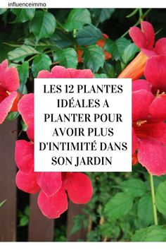 Decoration Plante, Autumn Garden, Orange Flowers, Horticulture, Garden Plants, Home Projects, Easy Crafts, Planters, Exterior