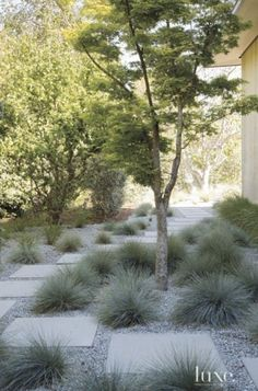 Front Yard and Garden Walkway Landscaping Inspirations 37 Side Yard Landscaping, Modern Landscaping, Landscaping Ideas, Walkway Ideas, Landscaping Software, Inexpensive Landscaping, Residential Landscaping, Landscaping With Gravel, Modern Gardens