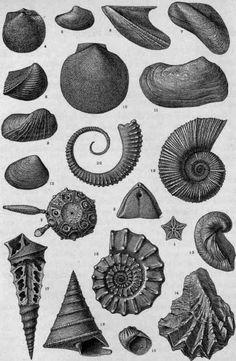 William B. Scott | An Introduction To Geology | Jurassic invertebrate fossils (1921)