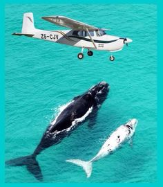 Whale watching, De Hoop Nature Reserve, Western Cape, South Africa