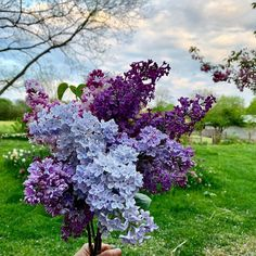 """Flower Magazine – 7 Things to Know about Lilac Bushes: In the short story """"Lil… Flower Magazine – 7 Things to Know about Lilac Bushes: In the short story """"Lilacs,"""" Kate Chopin wrote, """"When the scent of the… – View Lilac Tree, Lilac Flowers, Purple Lilac, Beautiful Flowers, Purple Roses, Foxglove Plant, Lilac Varieties, Fake Tattoo, Gardens"""