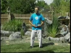 First Move: Tai Chi For Beginners/Seniors Video Sample basic form to enable Healing and Gathering Energy. (More info on Mark Johnson's Tai Chi for Healing video. Qi Gong, Tai Chi Video, Tai Chi Exercise, Tai Chi For Beginners, Weight Bearing Exercises, Tai Chi Qigong, Bone Loss, Body Tissues, Play