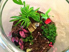 Shirley's World: Terrariums