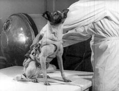 Laika/Sputnik2. Laika died in space as the technology to return from orbit had not yet been developed. Nov 3,1957