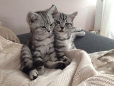 Muffin und Ben Katze | Pawshake