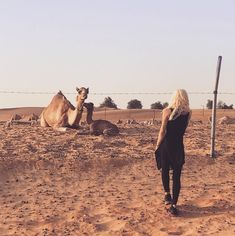 """Donatella Versace on Instagram: """"In the middle of the desert we came across this baby camel and mother. He was less than 48hrs and she was helping him to stand for the…"""" Baby Camel, Donatella Versace, Deserts, Middle, Animals, Instagram, Animales, Animaux, Postres"""