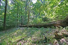 dysart-woods-6702-jpg.jpg 500×333 pixels