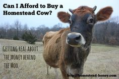 Can I afford to buy a cow?  A look at the expenses and savings of purchasing your first cow.  | Homestead Honey