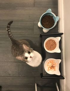 Elevated pet feeder for your pet's health and convenience. Not only does it work great for your pet (reduce whisker stress), and it also works wonder at your home (reduce messes). It's a EXCELLENT feeder that belong in a modern home!