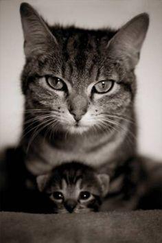 cute-kitten-7 animals