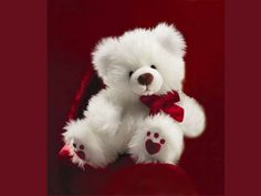 21 Best 20 Valentines Smart Looking Teddy Bear Wallpapers Images