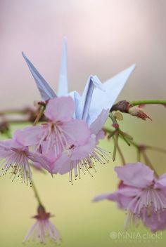 Origami Cranes - Photo: Lidiane Batitucci