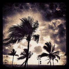 "@heatherlagarde's photo: ""#palm #tree #beach #ocean #palmtree #clouds  #sky #bw"""