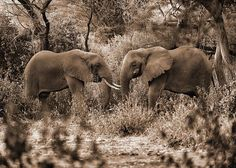 The untold story of the lost tusks Photo by Marzook Mohd -- National Geographic Your Shot
