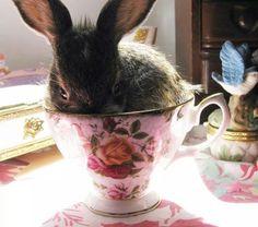 Cuki nyuszi csodálatos porcelánnal