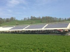 Case Study: Solar Array Gives Dairy Farm A Competitive Edge