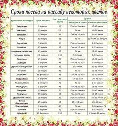 Ориентировочные даты посева рассаду основных овощных культур для средней полосы России: Сельдерей. Посадка – 25 мая. Возраст рассады – 70-80 дней, от посева до всходов – до 15 […]