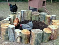 Chicken Coop - Chicken Dirt Bath Building a chicken coop does not have to be tricky nor does it have to set you back a ton of scratch. Backyard Chicken Coops, Chicken Coop Plans, Building A Chicken Coop, Backyard Farming, Chickens Backyard, Backyard Ideas, Backyard Projects, Firepit Ideas, Diy Projects