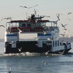 Miller Ferries carry passengers and vehicles to Put-in-Bay and Middle Bass Island, OHIO, depart Catawba