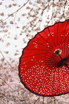 one of my to go to wagasa sakura cherry blossom hanami sprinf japan red umbrella Japanese Culture, Japanese Art, Traditional Japanese, Japanese Landscape, Japanese Painting, Japan Kultur, Red Umbrella, Susanoo, Asia Travel