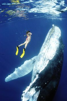swimming with whales