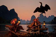 comorant fishing image - Google Search