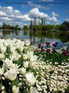 There Is A Beautiful Scenery.there Is A Small River.one Side Of River Has Plantation.other Side Of River Has Beautiful Flower Garden.