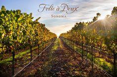 Top 6 Napa Valley Wineries.