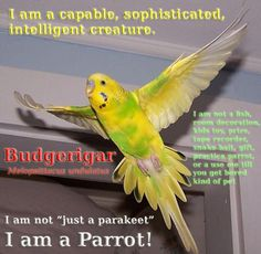 Two amateur lovebirds