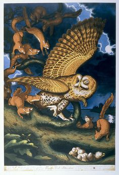 Find the latest shows, biography, and artworks for sale by Walton Ford. Turning the work of naturalist and painter John James Audubon on its head, Walton For… Walton Ford, Owl Art, Bird Art, Nocturne, John James Audubon, Visionary Art, Art Fair, American Artists, Artist At Work