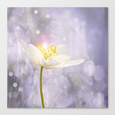 White Flower In The Forest Enchantments - Bokeh Background #decor #buyart #society6 Canvas Print