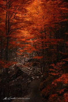 Photo Efflorescence by Mel Sinclair on Fall Pictures, Nature Pictures, Fall Pics, Samhain, Beautiful World, Beautiful Images, Beautiful Forest, Beautiful Scenery, Beautiful Landscapes