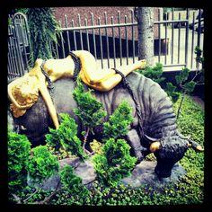 bull & girl