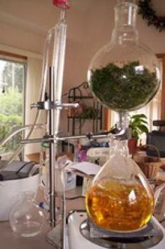 Extracting and Distilling your Own Essential Oils
