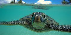 I Love Turtles...